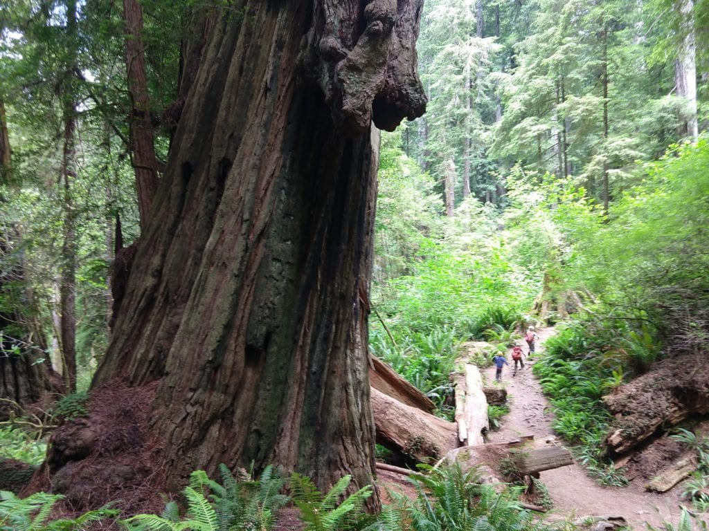 Hiking Redwoods National and State Parks